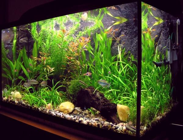 Aquashopping: tutto il necessario per gli appassionati dell' acquario